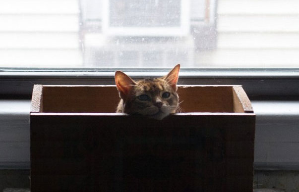 kittybox